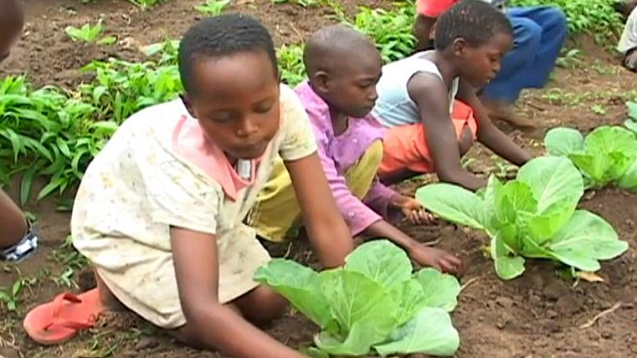 1971571337001_2546401190001_AfricaAgri-videostill-for-first-chapter-1024x576